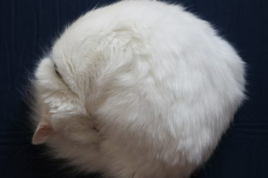 Unraveling the Hairball of Hybrid IT as You Migrate to the Cloud